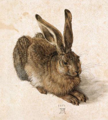 ウサギの特徴と生態を正面から描ききった名画 デューラー『野ウサギ』